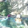 Fountain at the Alamo
