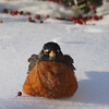 No more snow, please!<br /> <br /> Photographer's Name: Janet Stomps<br /> Photographer's City and State: Anderson, Ind.
