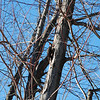 A large woodpecker that comes to our tree. There are two of them this size.<br /> <br /> Photographer's Name: Jenee Wilber<br /> Photographer's City and State: Anderson, Ind.