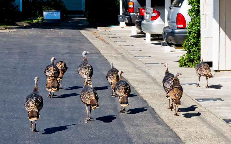 My neighbor Delore remarked that they had better be careful, it's getting close to Thanksgiving.
