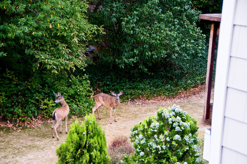 They were taken from the rear deck of my condo in Novato.