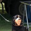 Vakthund
