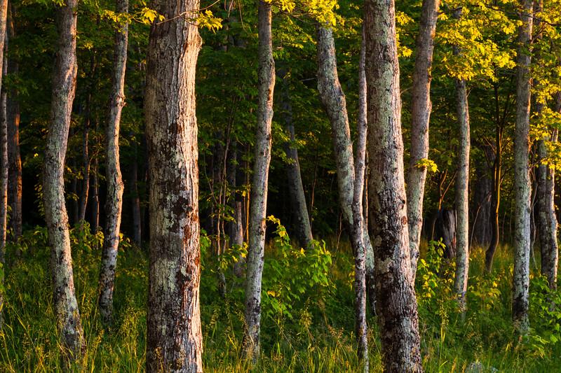 Big Bay Woods