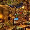 Rainforest Cafe Vegas 2010