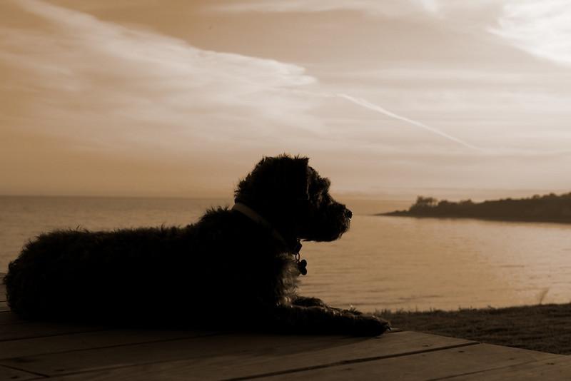 California Coast 2009
