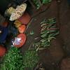 Okra in Aweil