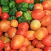 Ugandan Tomatoes in Aweil