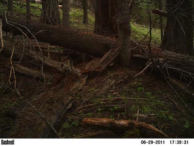 Wildlife Watchers Camera Check 7/28/11