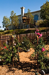 Climbing roses starting to go up the arbor, Soaring Spirits on the left and Berries 'n' Cream on the right.