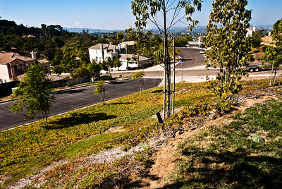 From our front yard, a view to the west toward downtown Escondido and San Marcos. Lots of room for more roses! Stay tuned...