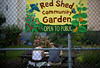 Fig 8.29 / Comunity garden with a sign or volunteers in a community garden or teens working a school garden<br /> <br /> Choice 3 of 13<br /> <br /> 02 Jul 2009, Brooklyn, New York City, New York State, USA --- Red Shed Community Garden provides gardening plots to local residents as well as green, open space for the community in Williamsburg, Brooklyn. --- Image by © Amy Sussman/Corbis