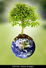 Fig 8.27 / Something that signifies planet / earth / connectedness / to replace existing image on page 219 from Mas 1e which is not availble<br /> <br /> Choice 6 of 11<br /> <br /> B0FPXN save the planet image composition with the earth and a tree growing from it