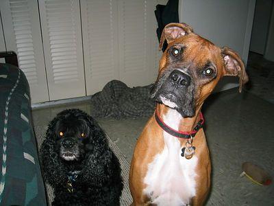Duke&Samson