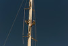 Mast collar (metal fitting bolted to the front of the mast) installed and checked