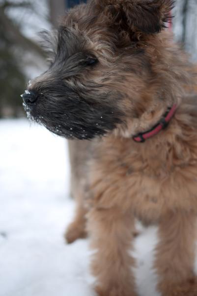 On a walk in the winter organized by Bark n Fitz in Waterloo Park