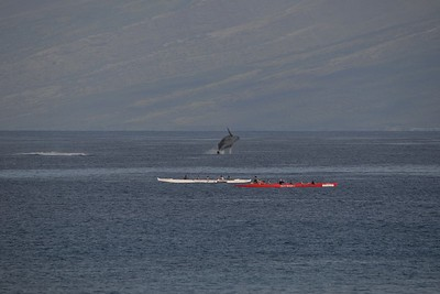 Look closely at the passengers in the red boat.  Whale watching fail!