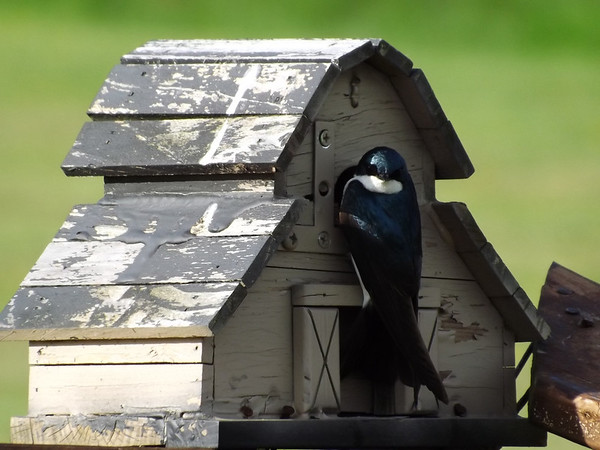 """""""Honey, I'm home:"""" Taken at my Richland Township farm.<br /> <br /> Photographer's Name: J.R. Rosencrans<br /> Photographer's City and State: Alexandria, Ind."""