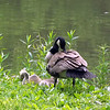A White River family at Mounds Park.<br /> <br /> Photographer's Name: J.R. Rosencrans<br /> Photographer's City and State: Alexandria, Ind.