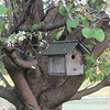 My husband built this bird house when he was in elementary school.<br /> <br /> Photographer's Name: Anita Barton<br /> Photographer's City and State: Alexandria, IN
