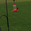 A Baltimore Oriole paid a visit to our hummer feeder.<br /> <br /> Photographer's Name: Linda Hastings<br /> Photographer's City and State: Alexandria, Ind.