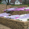 Phlox in bloom.<br /> <br /> Photographer's Name: Rex Rice<br /> Photographer's City and State: Middletown, Ind.