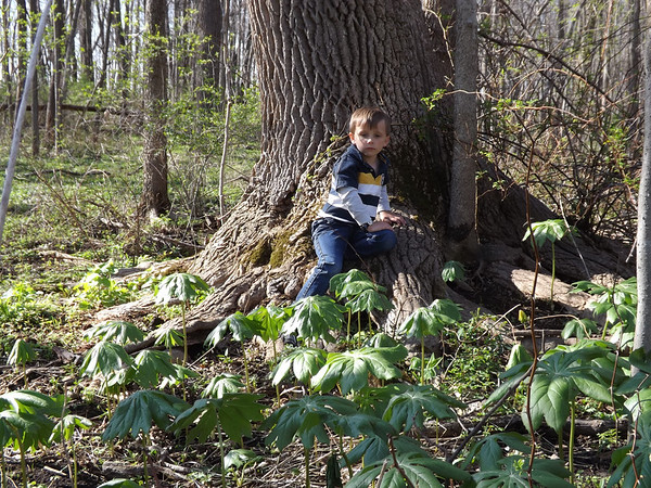 My grandson Eli Coxe looking for mushrooms in Richland Township.<br /> <br /> Photographer's Name: J.R. Rosencrans<br /> Photographer's City and State: Alexandria, Ind.