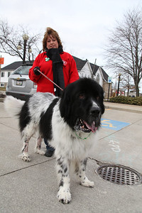 """17Mar2013__ Kim Zywczyk, of Vermilion, and her New Foundland """"Elvis"""" after the Pooch Patrol March for Maya in Amherst. photo by Ray Riedel"""