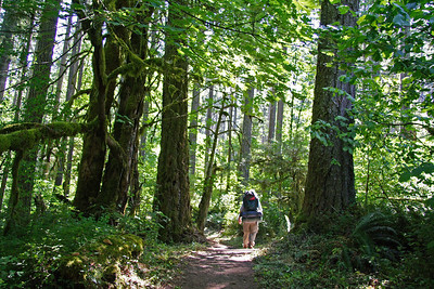 McDonald Forest Day Hike