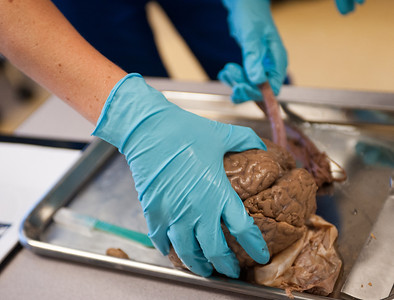 Students instruct corrections employees in the cadaver lab.
