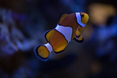 Variety of life in an aquarium and terrarium
