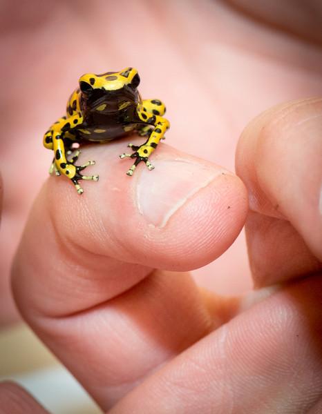 09_10_13_dart_frogs-9436-L.jpg