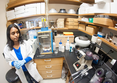 Work in lab for MRSA Study