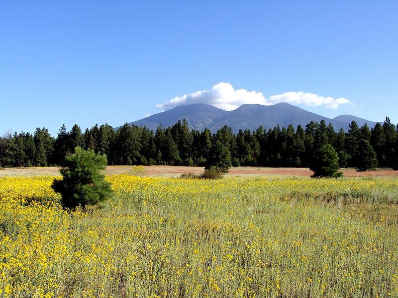 Okay, so this is not part of the trail....but I did have to drive past this colorful field with the San Francisco Peaks in the background to get to the Schultz Pass end of the trail to pickup Michael and Carmen.  That counts, right???