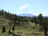A cleared part of the forest, with the San Francisco Peaks in the background.