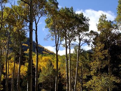 Lockett Meadow to the Inner Basin, 10-3-09