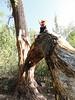 No tree limb shall go unclimbed...