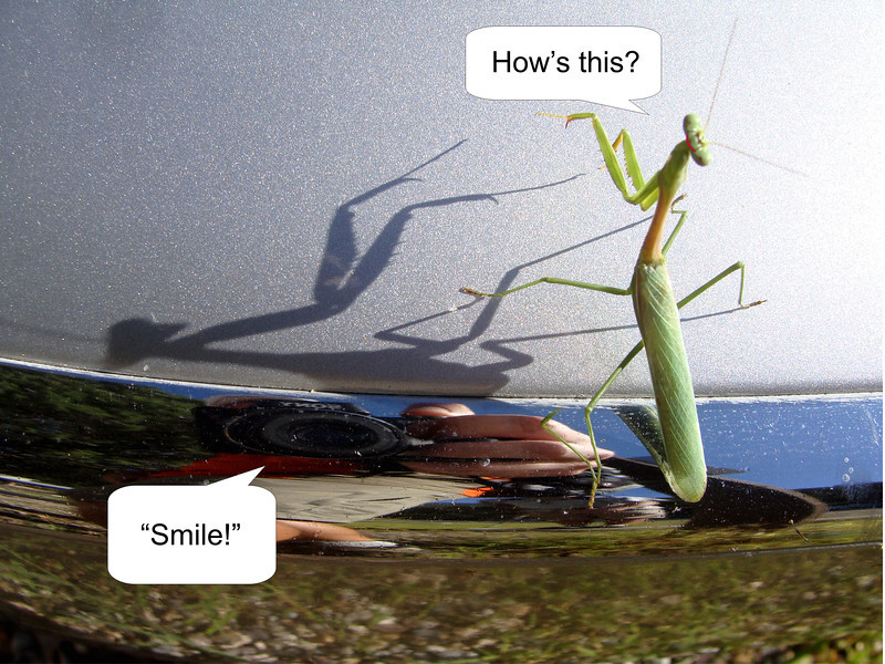 Just before we started the hike someone noticed this preying mantis on a car.