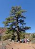 HUGE tree. ;-)