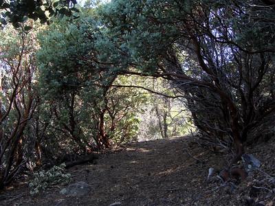 Six Shooter/Telephone Trail Loop, 4-25-10