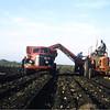 harvest potatoes - Rocket Brand - Robert E Pape, East Grand Forks, MN c.1958