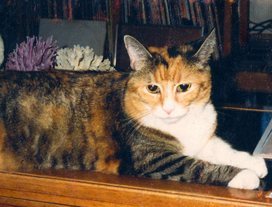 "KATRINA (1978-1994) Katrina and I were buddies for all of her 16 years. She always greeted me at the door and always made friends with anyone in the house, even soundly winning over my friend, William, who hated cats with a passion. One time, I was being tortured by a magazine salesman while just about to prepare dinner, when Katrina ran in from the back porch and gave out a long ""Meo-o-ow"" while staring right at me. ""Okay, thanks,"" I replied to her. The salesman asked what that was all about and I said, ""Oh, she's telling me the coals are ready on the grill."" He picked up his stuff and left then with a chuckle and a shake of his head, and without a sale. I still miss her."