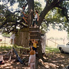 THE CLIMBING TREE<br /> This is one of the very few pictures I have of our beloved climbing tree at Grandpa's. Here I am giving instructions to the wee ones, some of whom I can't remember. I think that's my nephew Matt in the foreground.