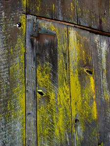 old barn door with lichen