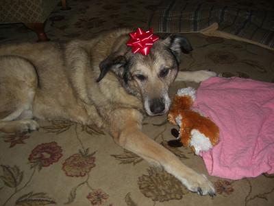 Riley dog. Merry Christmas.