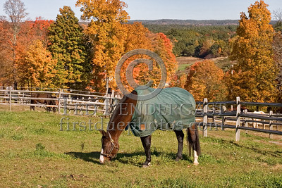 Images taken during a foliage road trip west of Route 495 along Route 62 in the towns of Berlin, Lancaster and Sterling.