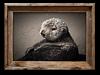 Fuzzy Otter, Moss Landing<br /> 13 x 19   $95.00