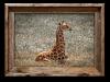Baby Giraffe<br /> 16 x 20 Canvass   $145.00