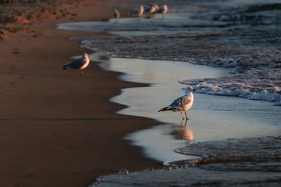 Michigan Gull if Surf (1 of 1)