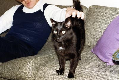 Harts-Cat-2