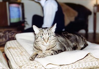 Harts-Cat-1